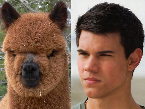 Taylor_Lautner_Llama